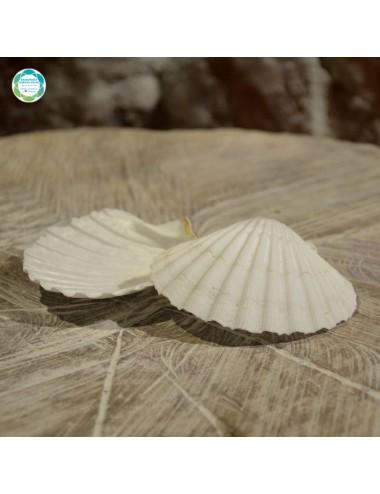 Biała muszla morska - ozdobna